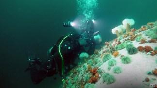 plongee-sous-marine-st-laurent-oursins